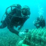 diving tours edivo
